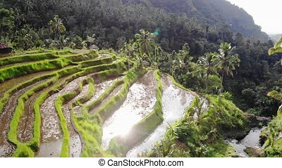 Aerial view on rice terraces in Bali on beautiful mountain and sunshine on the background with lens flare effects. slow motion.