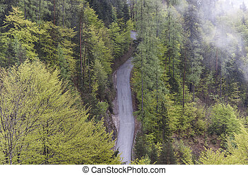 Aerial view on single country forest route.