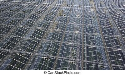 Aerial view on the large modern greenhouse. Flight over the...
