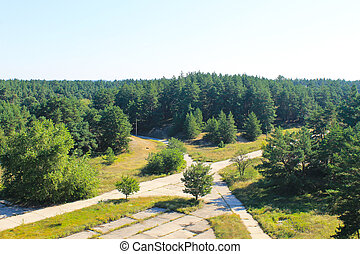 Aerial view on the pine forest