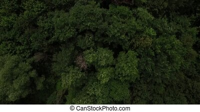 Aerial view on tree tops of a deep forest on a summer day