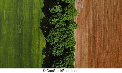 aerial view on treetop - drone flies up top view on bright ...
