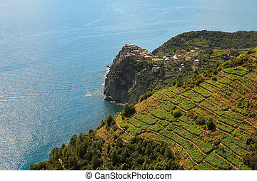 Aerial view on vineyards and Mediterranean Sea.