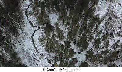 Aerial view on winter bog in the middle of snowy forest....