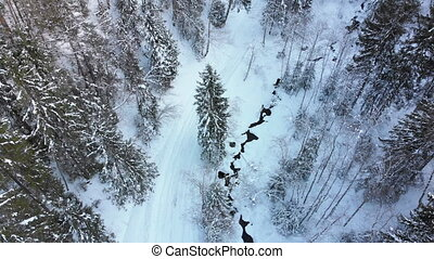 Aerial view on Winter Coniferous Carpathian Forest Near the Tops of the Trees in the Snowy Mountains.