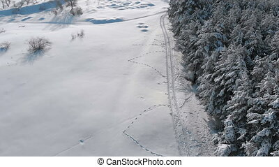 Aerial view on Winter Pine Forest and Snow Path on a Sunny Day