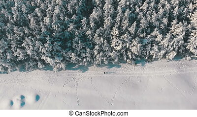 Aerial view on Winter Pine Forest and Snowy Path with People on a Sunny Day