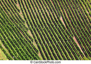 Aerial view over a vineyard