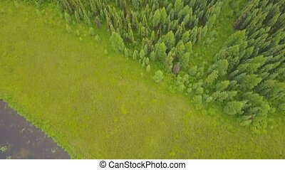 Aerial view over beautiful lake shore and forest in Alberta, Canada