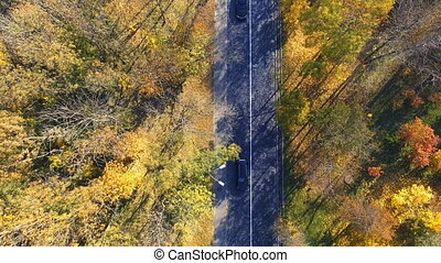 aerial view over car travelling through colorful forest -...