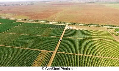 Aerial View Over Standard Fruit Gardens - AERIAL VIEW: This...