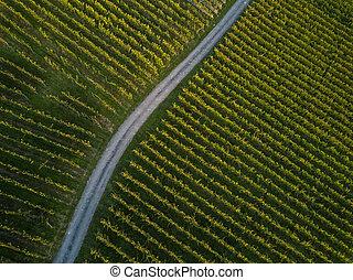 Aerial view over vineyard fields in Europe