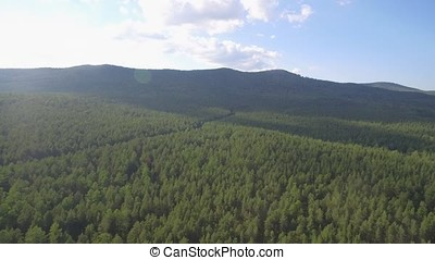Aerial view overhand the green forest and river. Beautiful panoramic video over the tops of pine forest. Aerial view