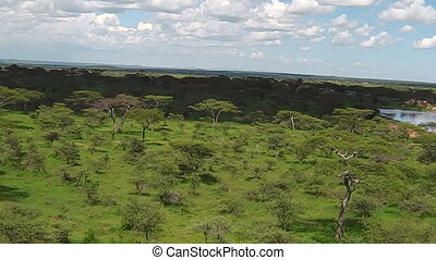 aerial view panorama of Serengeti National Park of Tanzania in Africa.