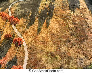Aerial view people walking along curved pathway with colorful autumn leaves near Dallas