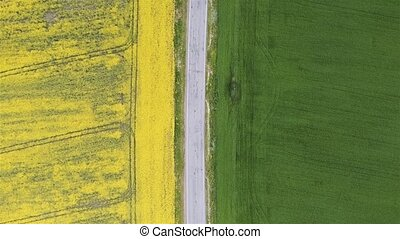 Aerial view rapeseed blooming. Yellow fields from above.