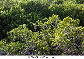 Aerial View Sanibel Captiva Conservation Foundation Florida