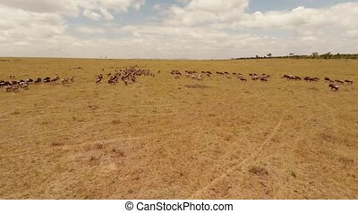 Aerial view. Savanna.