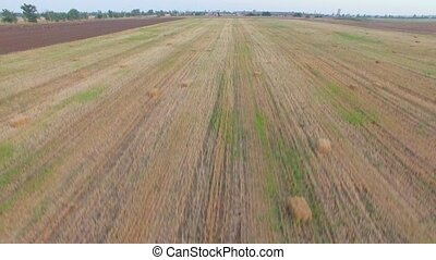 AERIAL VIEW. Straw Bales Lying On Harvested Field