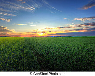 Aerial view sunset over field