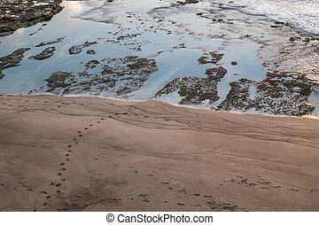 Aerial view the beach in Bali