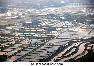 aerial view to Rice fields, south China