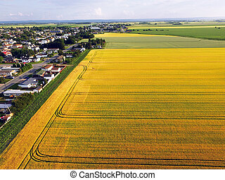 Aerial view town bordered by barley fields