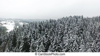 Aerial view. Winter forest in mountains