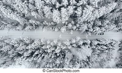 Aerial view: winter forest. Snowy tree branch in a view of...