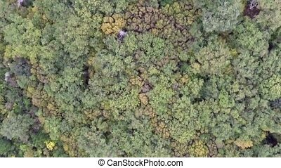 Aerial View - Yellow And Green Leaves Of Treetops - Aerial...