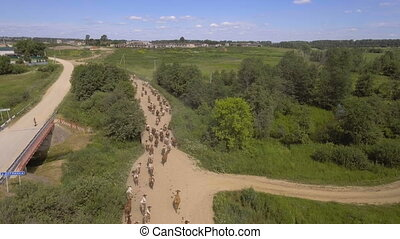 Aerial view:Cows walking along the road - Herd of cows...