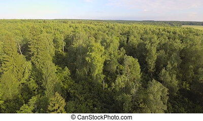 Aerial view.Flying over the forest. - Aerial view.Green tree...