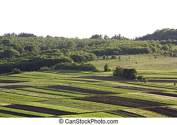 Aerial wide rural spring panorama of colorful rectangular plowed and green fields lit by sun surrounded by dense forest. Beauty and harmony of nature concept.