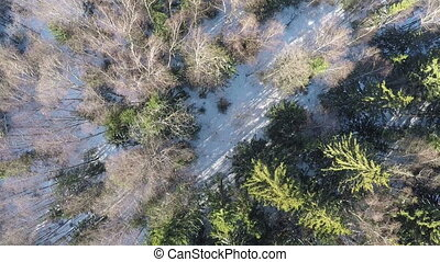 Aerial winter scene of mixed forest