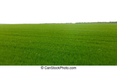 Aerial.Green field landscape.Meadow at summer.Drone flying...