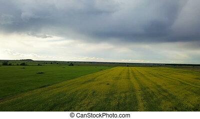 Aero view from drone in field of colza Brassica napus in...