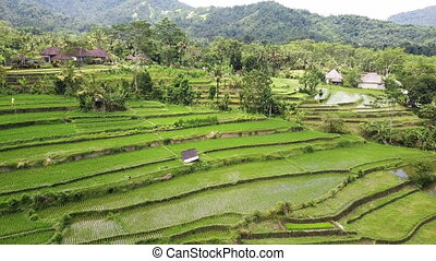 Aero view from drone on rice terraces of mountain and house of farmers. Bali, Indonesia