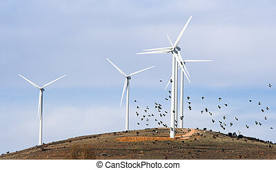 Aerogenerators  - Friends of the wind (windmills and birds)