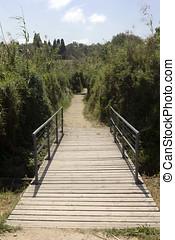 af træ, broer