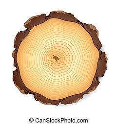af træ, kors sektion
