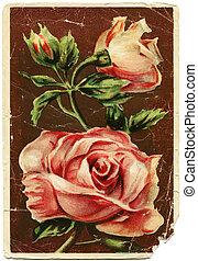 afbeelding, kunstenaar, -, rozen, ivano, shved