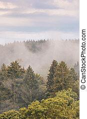 afbeelding, stijl, misty., verticaal, landscapes., ouderwetse , landscape, gefotografeerde, vroeg, herfst, achtergrond, hipster, retro, herfst, nevelig, humeurig, morning., bos