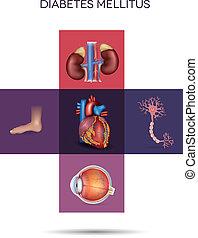 afetado, mellitus, órgãos, diabetes