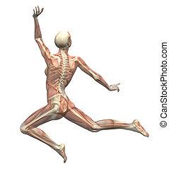 afføringen, kvinde, anatomi, -, leaping
