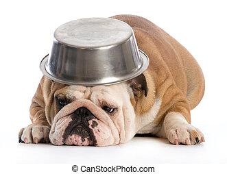 affamé, chien