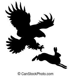 affamato, aggredire, uccello, lepre, silhouette