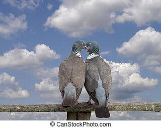 Affectionate birds, love,embrace