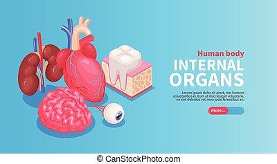 affiche, organes, interne