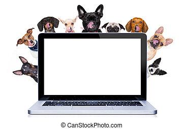 affiche, ou, derrière, bannière, chiens, rang