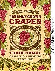 affiche, retro, raisins